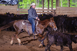 May 21, 2017 - Minshall Farm Cutting 4, held at Minshall Farms, Hillsburgh Ontario. The event was put on by the Ontario Cutting Horse Association. Riding in the 1,000 Amateur Class is James Cook on Dual Peps Tom Cat owned by the rider.