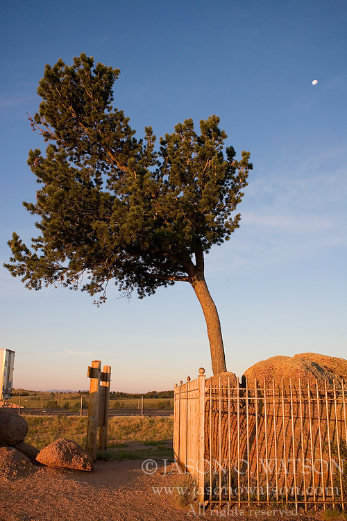 Tree in Rock, off of I-80 between Cheyenne and Laramie, Wyoming.