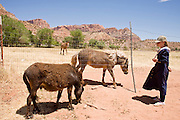 "June 16, 2008 -- COLORADO CITY, AZ: A member of the Jessop family, a polygamous family and members of the FLDS in Colorado City, AZ, checks on some of the ponies and burros they own in their corral in Colorado City. Colorado City and neighboring town of Hildale, UT, are home to the Fundamentalist Church of Jesus Christ of Latter Day Saints (FLDS) which split from the mainstream Church of Jesus Christ of Latter Day Saints (Mormons) after the Mormons banned plural marriage (polygamy) in 1890 so that Utah could gain statehood into the United States. The FLDS Prophet (leader), Warren Jeffs, has been convicted in Utah of ""rape as an accomplice"" for arranging the marriage of teenage girl to her cousin and is currently on trial for similar, those less serious, charges in Arizona. After Texas child protection authorities raided the Yearning for Zion Ranch, (the FLDS compound in Eldorado, TX) many members of the FLDS community in Colorado City/Hildale fear either Arizona or Utah authorities could raid their homes in the same way. Older members of the community still remember the Short Creek Raid of 1953 when Arizona authorities using National Guard troops, raided the community, arresting the men and placing women and children in ""protective"" custody. After two years in foster care, the women and children returned to their homes. After the raid, the FLDS Church eliminated any connection to the ""Short Creek raid"" by renaming their town Colorado City in Arizona and Hildale in Utah.  Photo by Jack Kurtz / ZUMA Press"
