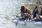 Henley, GREAT BRITAIN. General views  Dog and  Spectators, Henley Regatta Course. 2012 Henley Royal Regatta...Sunday  16:49:17  01/07/2012. [Mandatory Credit, Peter Spurrier/Intersport-images]...Rowing Courses, Henley Reach, Henley, ENGLAND . HRR.