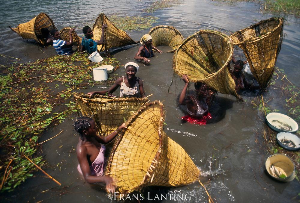 Hambukushu women fishing with baskets, Okavango Delta, Botswana
