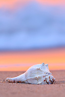 I photographed the shell on the beach at Avalon Pier in Kitty Hawk North Carolina. The warm reflection of the sunrise in the surf contrasts nicely with the blue foam.