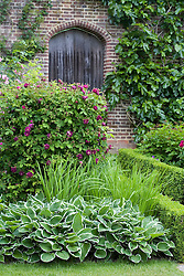Hosta and rose by a doorway in the Rose Garden at Sissinghurst Castle