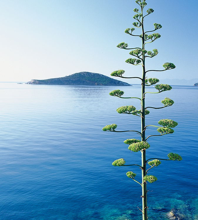 Tree and coastline in Lesbos, Greece