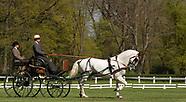 Horse Carriage dressage Kladruby n. Labem 1