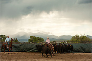 Cutting horses, cowgirl, herd holders, father, daughter,  Whitehall, Montana