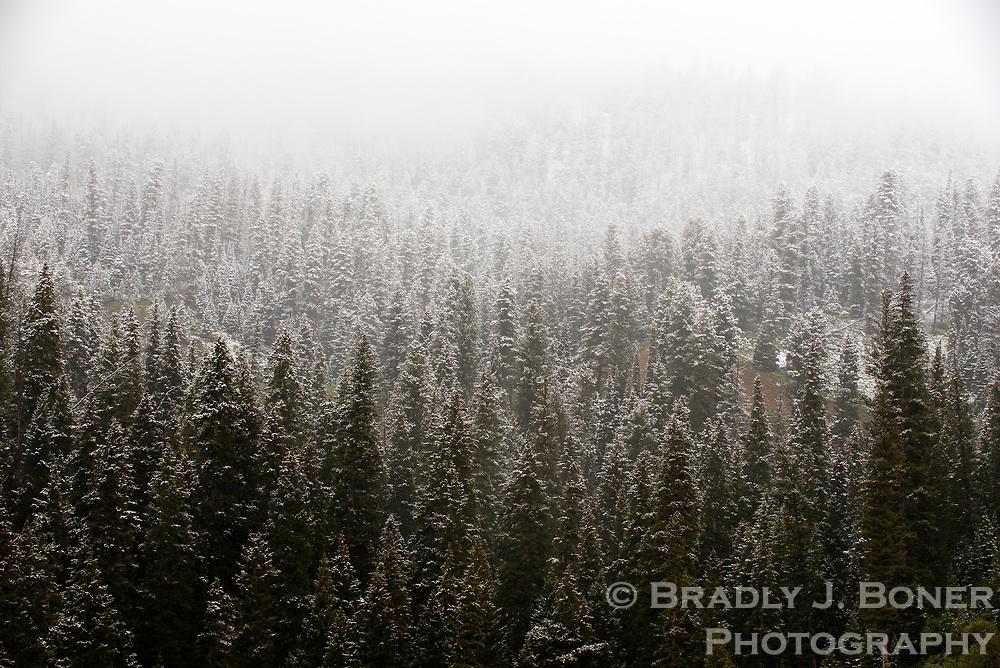 June snow on Teton Pass