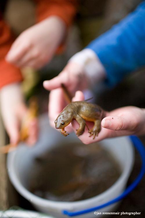 4 year-old kids catch salamanders at Horning's Hideout stocked fishing lake near Hillsboro Oregon.