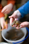 4 year-old kids catch salamanders at Horning's Hideout stocked fishing lake near Hillsboro Oregon.