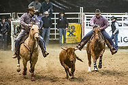 Steer wrestler Joe Robert Nelson makes his run during slack at the Bismarck Rodeo on Saturday, Feb. 3, 2018. This photo and more from most runs are available at Bobwire-S.com.