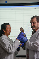 A student works with a duck in a lab in Williams Hall. Photo by Marc Hall