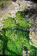 Algae Rothko