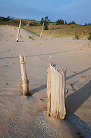 Remains from the Ghost Forest at Sleeping Bear Dunes National Lakeshore
