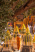 A Buddhist nun bows to the Bodhi Tree at the Mahabodhi Temple, the site of the Buddha's enlightenment, in Bodhgaya India.