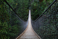 The Lynn Canyon Suspension Bridge in Lynn Canyon Park, North Vancouver, British Columbia, Canada
