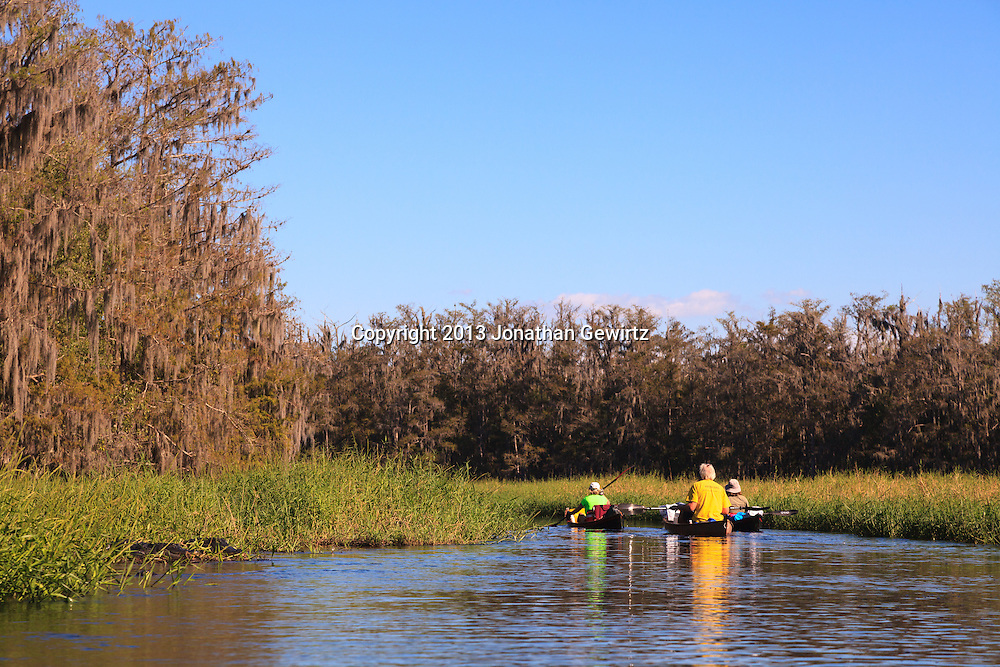 Canoeists in the water and alligators on the bank of scenic Fisheating Creek in the Fisheating Creek WMA, Florida. WATERMARKS WILL NOT APPEAR ON PRINTS OR LICENSED IMAGES.