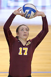 07 November 2014:  Caroline Holt sets the ball during an NCAA womens volleyball match between the Loyola Ramblers and the Illinois State Redbirds at Redbird Arena in Normal IL