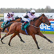 Lingfield 30th December 2012