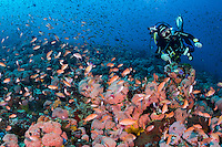 A young diver and a few of his finny friends<br /> <br /> Shot in Indonesia