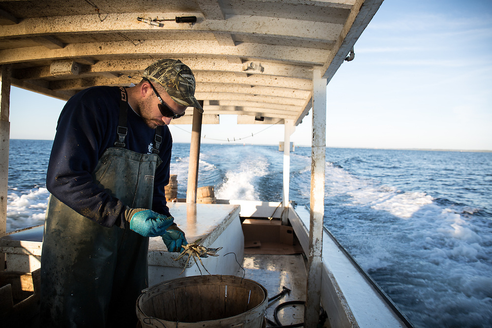 Ryan Ribb places a crab in the basket after measuring it. If the crab is too small, they will throw it back into the bay. | October 11, 2015