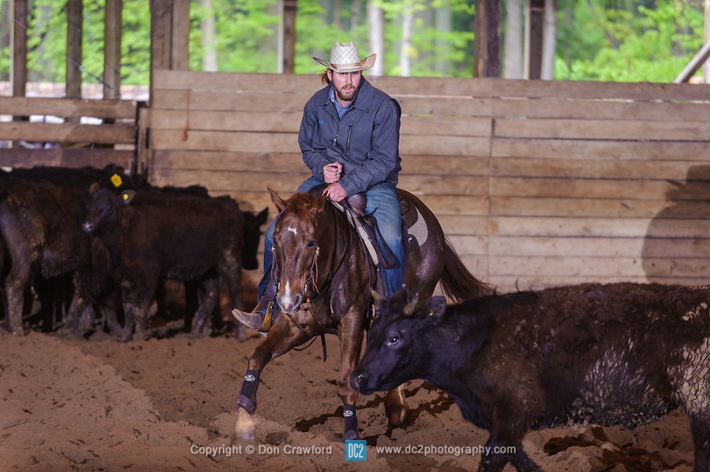 May 21, 2017 - Minshall Farm Cutting 4, held at Minshall Farms, Hillsburgh Ontario. The event was put on by the Ontario Cutting Horse Association. Riding in the 2,000 Limited Rider Class is James Cook on Dual Peps Tom Cat owned by the rider.