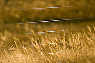 Prairie grasses near a wire fence in a field near Boulder, Colorado