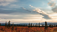 Fall colors contrast with the sunset sky over Paxson Lake in Interior Alaska. Evening.
