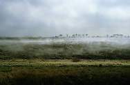 Misty fen landscape