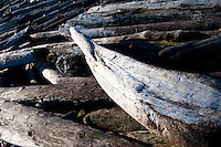 A still-life art photo of driftwood at Island View Regional Park, Victoria, BC
