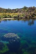Pupu springs, New Zealand