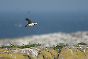 Farne Islands 05-05-07