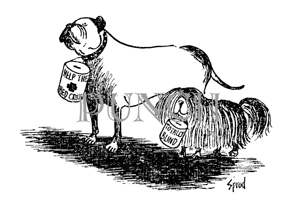pets  animals cartoons from punch magazine by george sprod