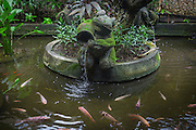 Fish Pond at Tugu Hotel.