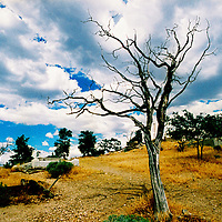 A dead tree in dry countryside