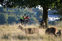 © Licensed to London News Pictures. 09/10/2016. London, UK. Two men cycling past deer in a field on a bright autumnal morning in Richmond Park, London. . Photo credit: Ben Cawthra/LNP