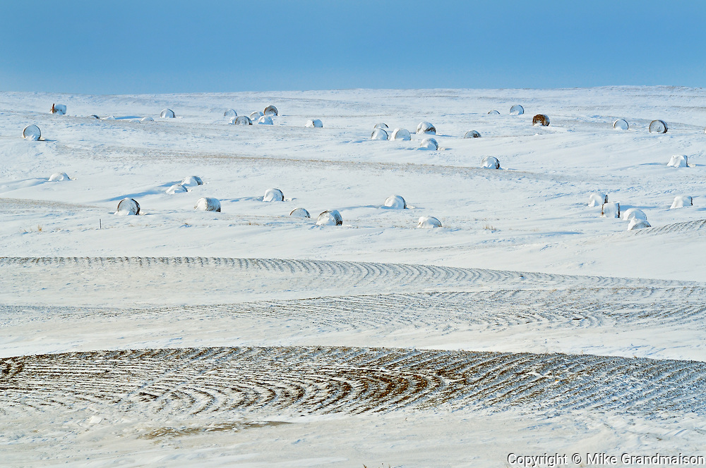 BAles in winter<br /> Viceroy<br /> Saskatchewan<br /> Canada