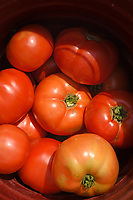 Tomatoes fresh off the vines at Mountain Horticultural Research and Extension Center in Henderson County.