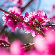 20170322 Spring Blooms