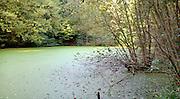 Nederland, Ubbergen, 19-10-2012Het beschermd natuurgebied het bronnenbos, bij voormalig klooster de Refter in de herfst.Water loopt hier uit kleine bronnen langs de heuvel naar beneden en heeft een unieke biotoop.De gemeente Beek-Ubbergen is in 2007 uitgeroepen tot de groenste van Nederland. Hij ligt voor een deel op een heuvelrug, stuwwal met bossen en waterlopen. Foto: Flip Franssen/Hollandse Hoogte