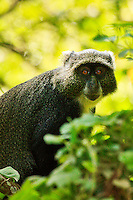 Portrait of a monkey sitting at a tree. Fine art photography print. Wall art and stock images