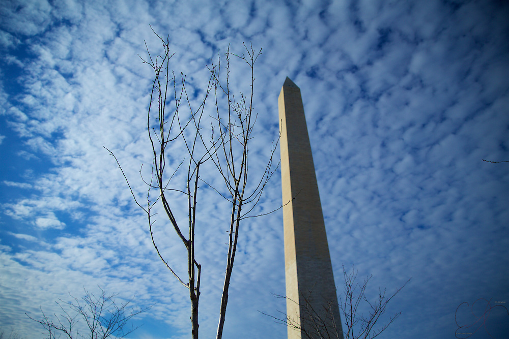 A bare tree limb on a brisk winter day provides a nice contrast with the towering Washington Monument in the background.