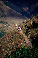 A team of porters treks through the lowlands of the Himalayas in Nepal, carrying various pieces of furniture on their heads.
