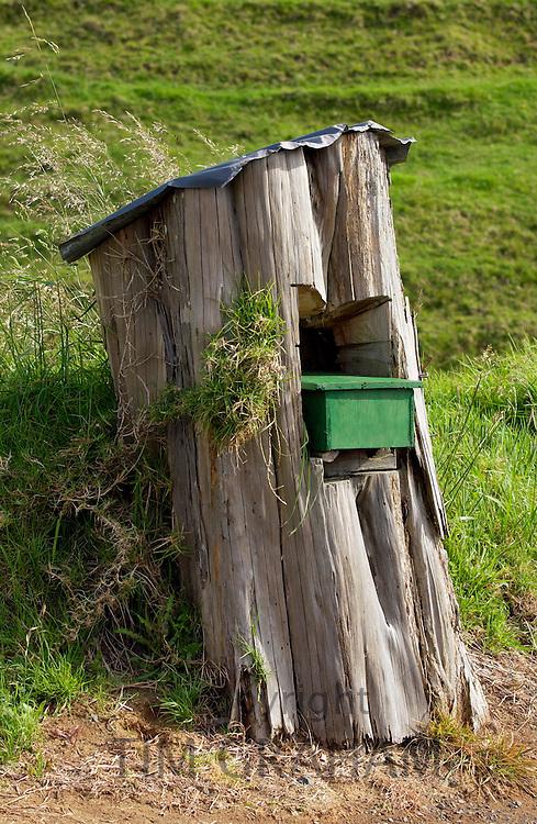 Mailbox set into a tree trunk, North Island, New Zealand