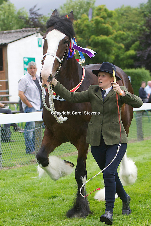 Ceri Pleavin with Mrs S J Pleavin's bay mare  Shortly Olympic Lade  Sired by Moorfieldo Manor Mac<br />