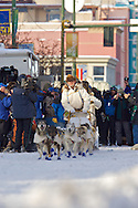 March 7th, 2009:  Anchorage, Alaska - The dogs are off as the Honorary mushers, Rod and Carol Udd take a sled down 4th Avenue to kick off the 2009 Iditarod.