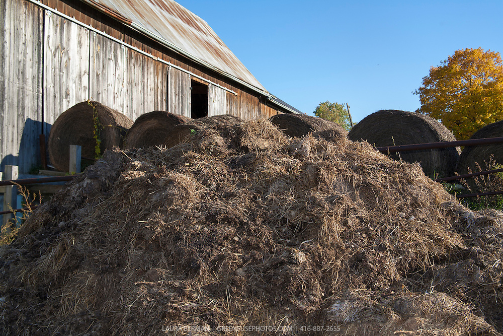 A large pile of barn waste (manure and bedding straw) in front of a barn, against a bright blue sky