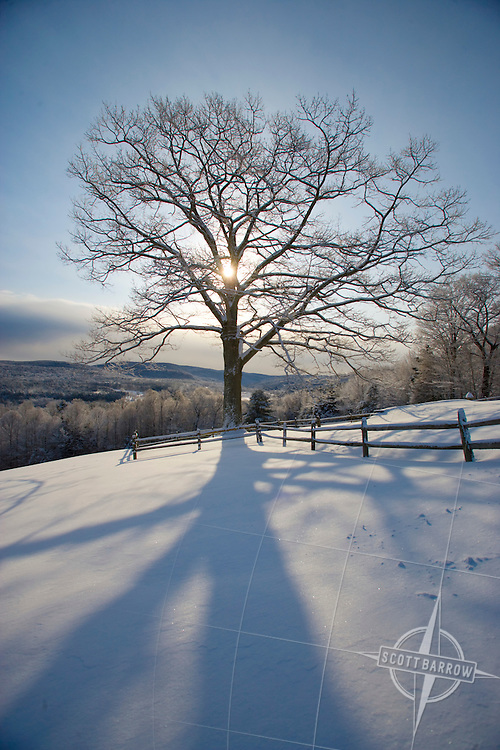 Bare tree in winter scape.