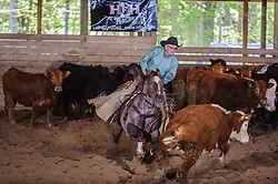 May 20, 2017 - Minshall Farm Cutting 3, held at Minshall Farms, Hillsburgh Ontario. The event was put on by the Ontario Cutting Horse Association. Riding in the Non-Pro Class is Greg Wilde on Bobby Cee Lena owned by the rider.
