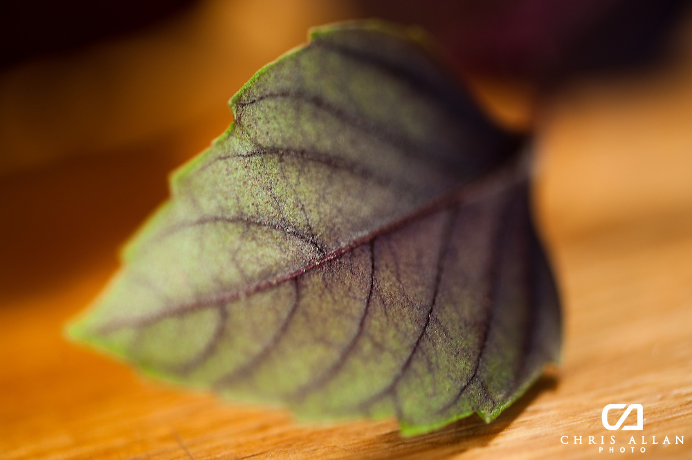 Purple Basil leaf