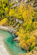 Autumn leaves at Skipper's Canyon, Queenstown, New Zealand